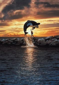 Free Willy still my favorite animal movie. Plus it showed that Whales should not be in tanks. They are too big!