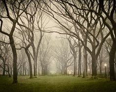 Tree Photograph Fog Wall Decor Spring by EyePoetryPhotography