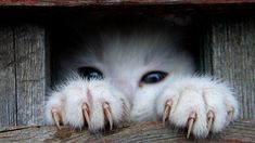 Hidden kitten ♡... re-pin by www.StoneArtUSA.com ~ affordable custom pet memorials for everyone.