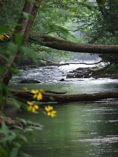 S = Smoky Mountain Stream Beautiful World, Beautiful Places, Beautiful Pictures, Imagen Natural, Foto Picture, Photos Voyages, Seen, All Nature, Belle Photo