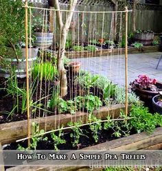 How To Make A Simple Pea Trellis - LivingGreenAndFrugally.com