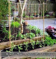 How To Make A Simple Pea Trellis - LivingGreenAndFrugally.com