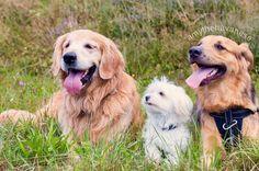 #tb zu unserem Treffen mit  Kim & Boogie von @boogietheaussiemix Andrea & Finn (haben leider kein Instagram mehr) und Pascale von @swissdog.vladi  Das war vor etwa einem halben Jahr die Hunde waren also noch recht jünger und haben sich zum Teil nochnicht so gut verstanden Amy & Boogie zickten einwenig rum was mit der Zeit aber auch verging Finn hingegen verstand sich mit beiden gut. Bald werden wir das Treffen wiederholen - ich freu mich schon Ob die Stimmung nächstes mal zwischen den Hunden…