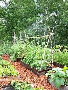 Small vegetable gardens - 6 Wise Cool Ideas Outdoor Garden Ideas Curb Appeal garden ideas decking tiny house Backyard Garden Landscape Back Yards garden ideas decking tiny house Large Backyard Garden Water Features Vegetable Garden For Beginners, Backyard Vegetable Gardens, Vegetable Garden Design, Gardening For Beginners, Outdoor Gardens, Gardening Tips, Container Gardening, Organic Gardening, Vegetable Garden Fences