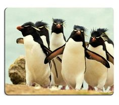 Landscapes Nature Flock Penguins Crowd Mouse Pads Customized Made to Order Support Ready 9 7/8 Inch (250mm) X 7 7/8 Inch (200mm) X 1/16 Inch (2mm) High Quality Eco Friendly Cloth with Neoprene Rubber MSD Mouse Pad Desktop Mousepad Laptop Mousepads Comfortable Computer Mouse Mat Cute Gaming Mouse pad *** See this great product.