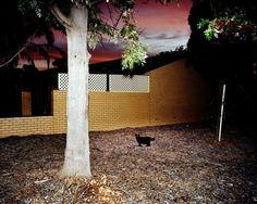 Trent Parke (The Christmas Tree Bucket) Seaton, Adelaide, South Australia 2007