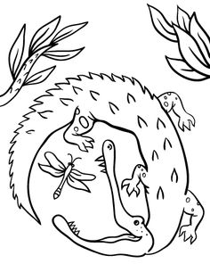 free alligator coloring page