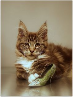 Kitties & Shoes ~ what a great pair!!