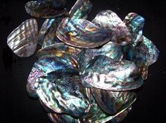 Paua Mana Shell Pieces