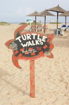 Photo of Turtle Walks & Hatchery Visits