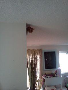 Ceiling Rufus