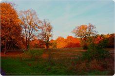 Farbenfroher Herbst.... #EssenReisenLeben #Herbst #Autunno #Autumn