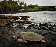 panaluu black sand beach | tumblr_mnuzmml2R71rw872io6_r1_1280.jpg