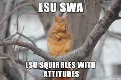 This weather.is nuts quotes quote winter winter quotes winter images funny winter quotes winter memes Funny Winter Quotes, Funny Animals, Cute Animals, Animal Jokes, Animal Pics, I Cannot Sleep, Funny Memes, Hilarious, Pet Memes