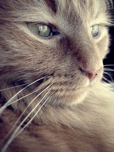 Beautiful Pictures of a Cat