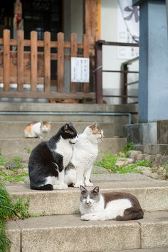 2対2 - cat island I think it is in Japan