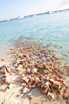 Conch farm on the Turks & Caicos Islands!
