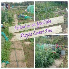 Purple Sweet Pea on YouTube