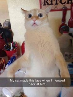 Cats 🐱 - Cat, cat memes, cats funny, cats and kittens and cats cute. Funny Animal Memes, Animal Quotes, Cute Funny Animals, Funny Animal Pictures, Cat Memes, Funny Cute, Cute Cats, Funny Memes, Funny Pics