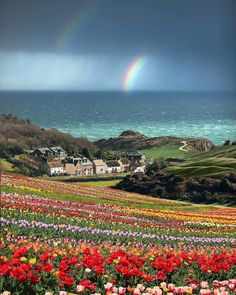 The inspiration for my town of Grace-by-the-Sea: Lulworth Cove. I love the rainbow and the flowers (not sure the flowers are actually there, but it sure is pretty!).