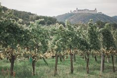 Wedding photography at Stift Göttweig is charming. This destination offers nice wedding locality. Fine art on ambient light or in interiors. Vineyard, Wedding Photography, Nice, Outdoor, Wedding Shot, Outdoors, Wedding Pictures, Outdoor Games, Bridal Photography