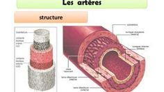 Pourquoi une artère se bouche ? Voici comment nettoyer vos artères avec un ancien remède allemand ! (RECETTE ET MODE D'EMPLOI)