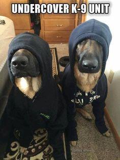 GERMAN SHEPHERD POLICE DOG