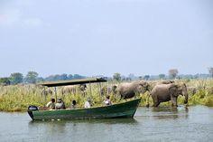 Photographic safari, team building photo safari and wildlife photography course accommodation Mvuu Lodge, Malawi.