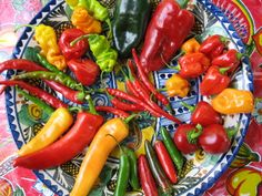 Chiles Spicy Recipes, Mexican Food Recipes, Sweet Recipes, Chile Picante, Chile Guajillo, Chile Poblano, A Food, Food And Drink, Recipes