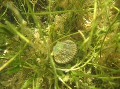 just got back from scalloping in keayton beach!  so much fun!  a must do!