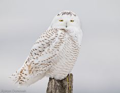 owls...so cool