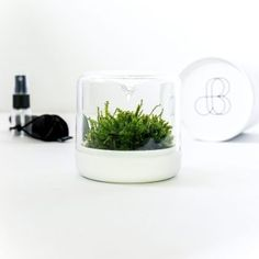 Botanica Boutique – Plantae petite