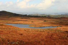 Connemara gold© Annie Japaud 2013