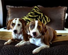 Even dogs love the Hotel Madera in Washington, DC! All Kimpton Hotels are 100% pet friendly.
