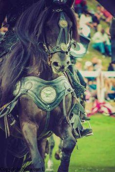 Cavalcade : Cavalcade : Mario Luraschi's stunt-horses