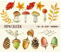 OFF SALE Autumn clipart Fall clip art Watercolor Autumn Thanksgiving clipart Digital clipart Autumn leaves clipart leaf clipart Harvest Watercolor Flowers, Watercolor Paintings, Fall Clip Art, Thanksgiving Pictures, Leaf Clipart, Autumn Illustration, Fall Projects, Fall Cards, Bullet Journal Inspiration