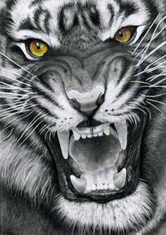 This is a drawing of my first tiger which is, what I think, one of the most beautiful animals in the world. Like the cat-drawings made earlier, I'm coloring the eyes in this drawing but keep the . Tiger Sketch, Lion Sketch, Tigergesicht Tattoo, Ace Of Spades Tattoo, Japanese Tiger Tattoo, Lion Tattoo Sleeves, Tiger Poster, Snake Art, Tiger Art