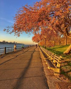 Trees in bloom along the #running path  #nyc #hudsonriver #10miles #runner #spring #instarunners #fitness #fitfamily #exercise #runners #runnershigh #picoftheday #photooftheday