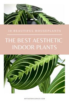 Indoor Garden, Indoor Plants, Majesty Palm, Birds Of Paradise Plant, Indian Arts And Crafts, Cheese Plant, Plant Aesthetic, House Plants Decor, Tall Plants