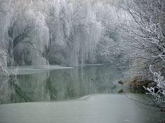 winter-wonderland-winter-image-120-photo-sylvia-lilova.jpg (950×713)