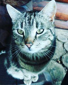 my cat :) #cat #animals