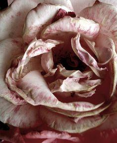 Soft, soft lilac, beautiful...  http://www.facebook.com/MormorsStuer