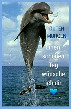 Morning Humor, Funny Morning, Whale, Movie Posters, Animals, Buen Dia, Good Morning Images, Good Night, Funny Pets