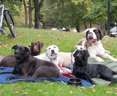 Top Dog Parks Located on the East Coast
