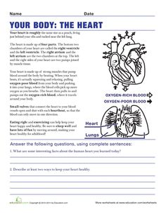 Understanding the Human Body - 5th Grade Worksheets | Education.com