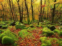 Bosque de Urbia, Aizkorri, Euskal Herria Kos, Vineyard, Landscapes, Country Roads, Outdoor, Sensitivity, Forests, Picture Wall, Countries