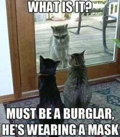 Top 30 Funny animal memes and quotes...made me laugh harder than it should have...lol
