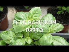 Basilikum Feta Pesto - ruckzuck . - YouTube