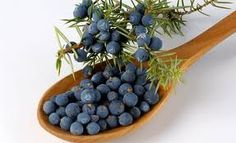 Find here how to make Juniper Berry Ointment for Joint, muscle and Arthritis Pain Relief.