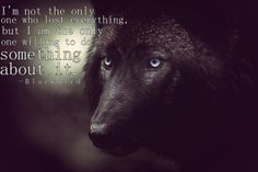 BLACK WOLF with blue eyes, a striking animal rarely seen here in the Celtic garden Wolf Love, Beautiful Creatures, Animals Beautiful, Cute Animals, Wolf Spirit, My Spirit Animal, Wolf Pictures, Animal Pictures, Wolf Hybrid